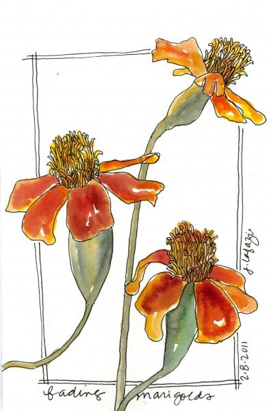 LaFazio-marigolds-393x600