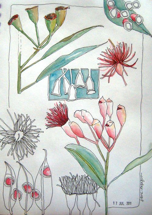 Eucalyptus page 1a